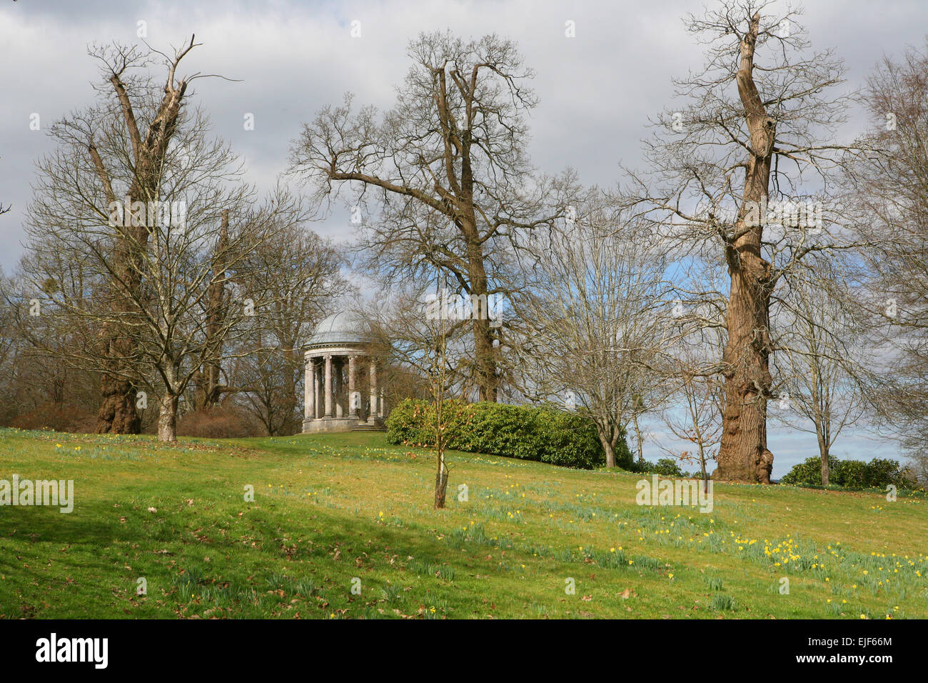 The Ionic Rotunda surrounded by daffodils in the Pleasure Grounds at Petworth in the Spring - Stock Image