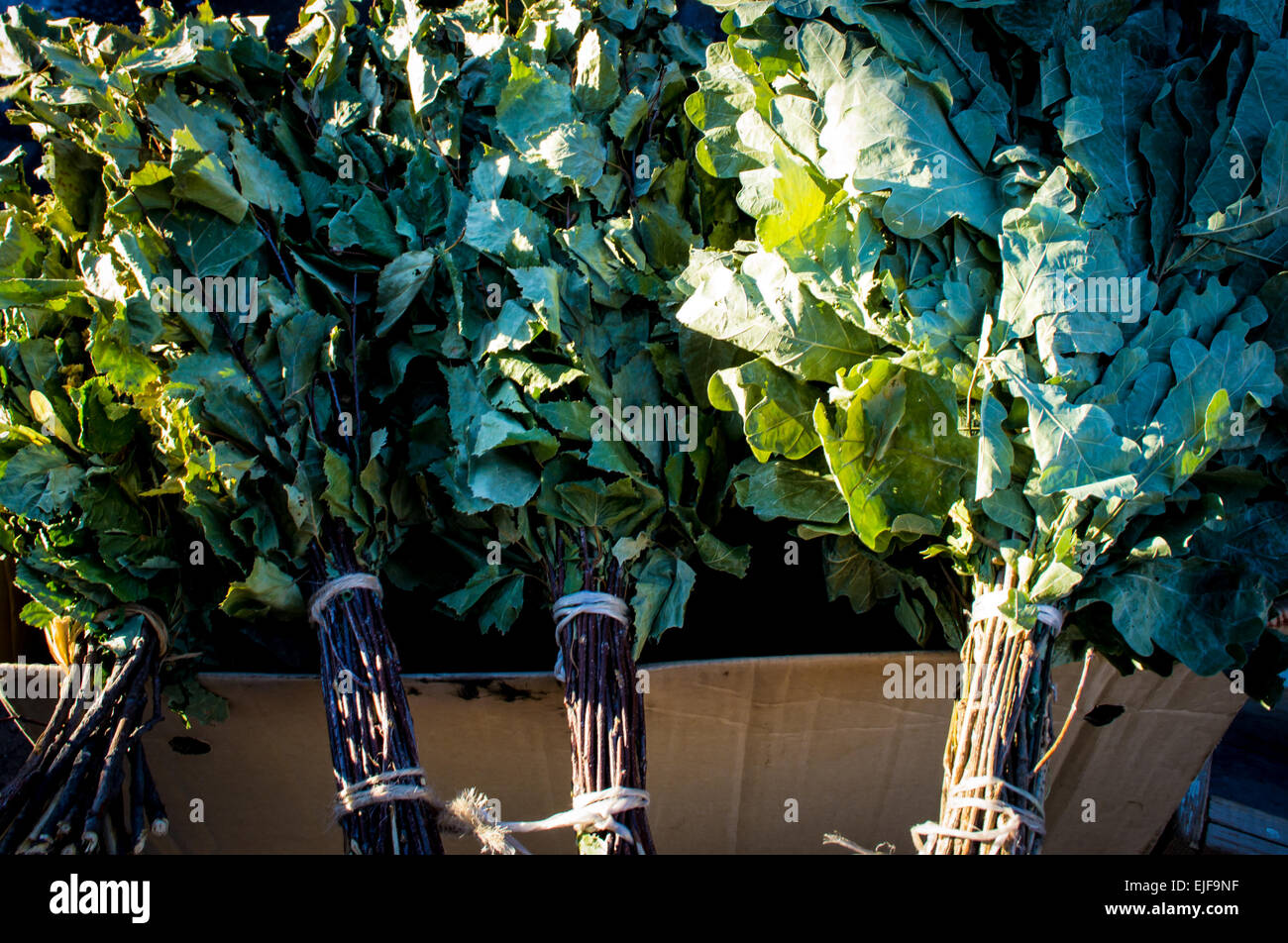 Oak and Birch leaves to be used in Russian saunas to clense the skin organically - Stock Image