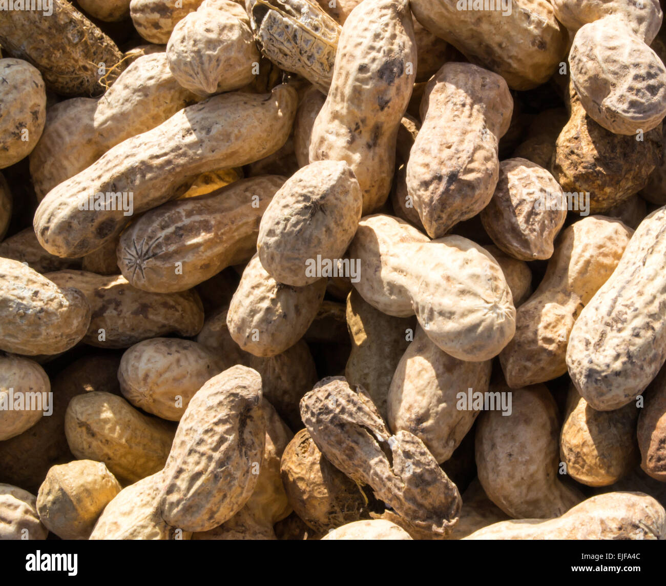 Monkey nuts are a cheap form of the famous legume peanut - Stock Image