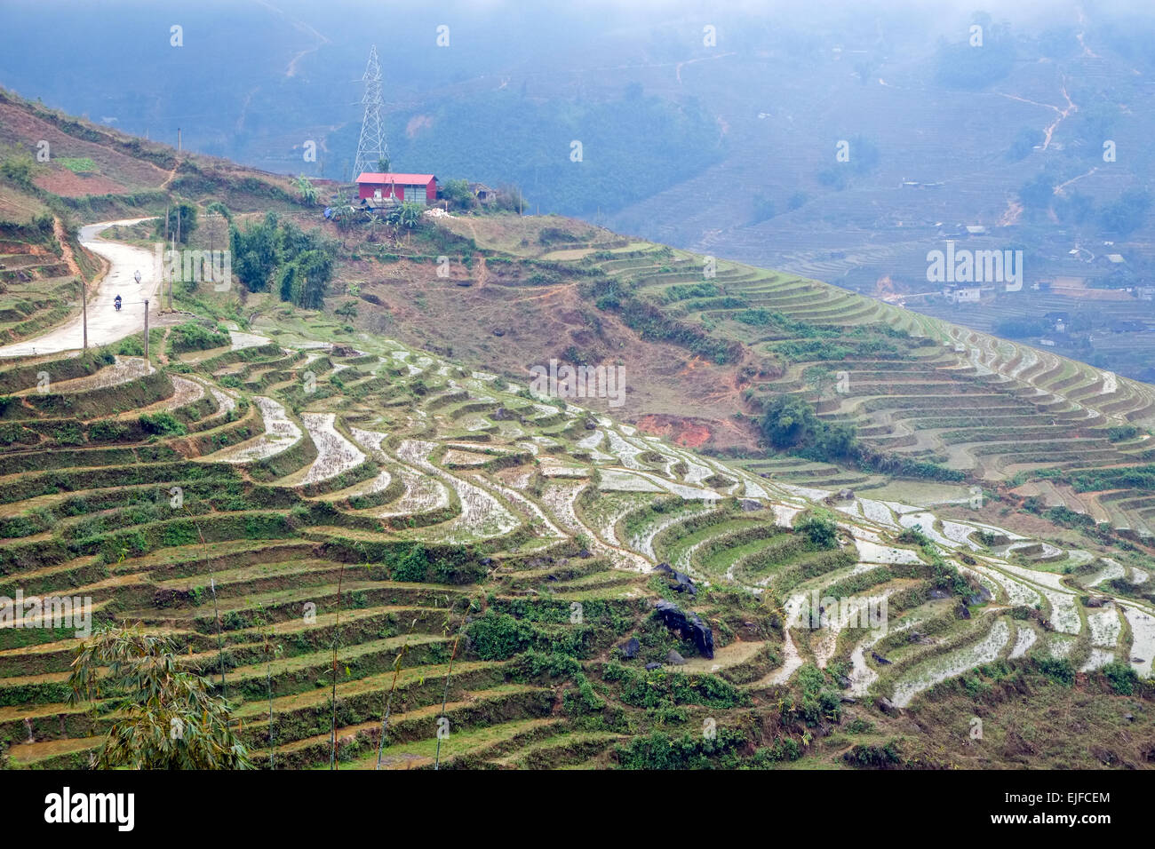 Rice terraces on a foggy day outside Sapa in the Lao Cai province of Vietnam. - Stock Image