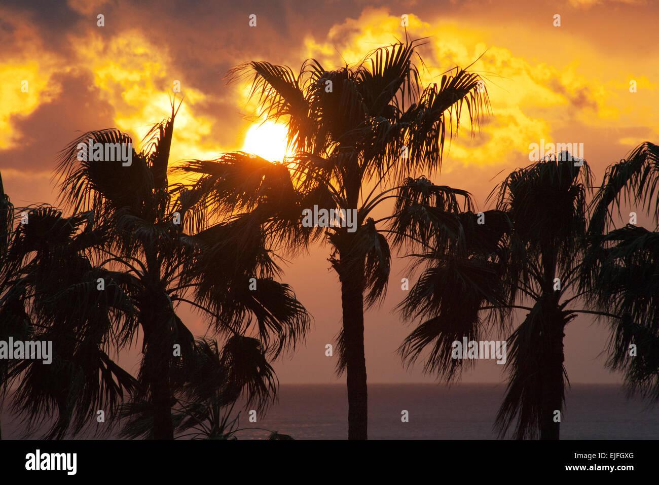 Sunset over palm trees, Satsuma Peninsula, Kyushu Island, Japan - Stock Image
