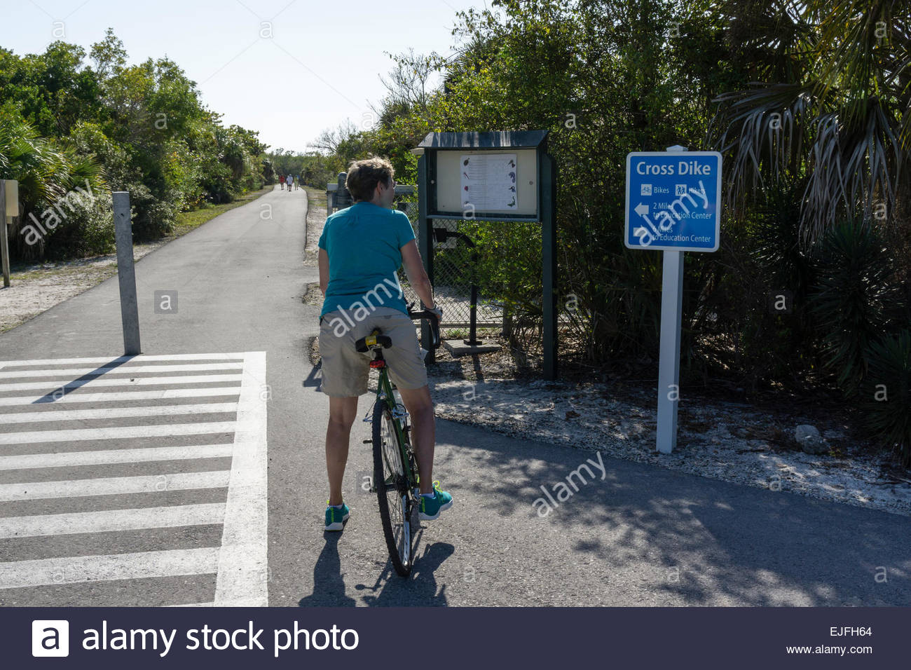 A woman cyclist pauses at a path along Wildlife Drive at Ding Darling wildlife refuge on Sanibel Island, Florida - Stock Image