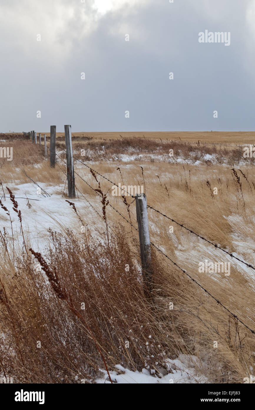 Prairie Winter, barbwire fence line - Stock Image
