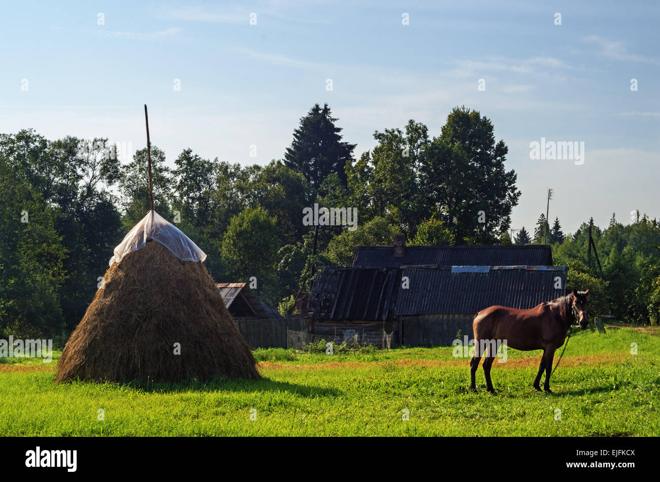 Rural landscape. Brown horse and haystack on pasture. Stock Photo