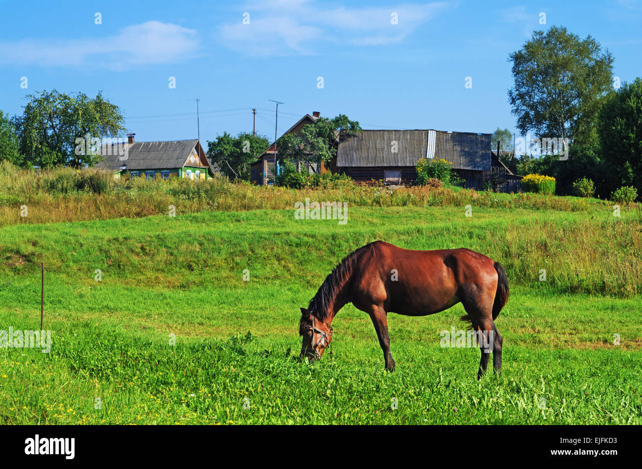 Rural landscape. Brown horse on pasture. Stock Photo