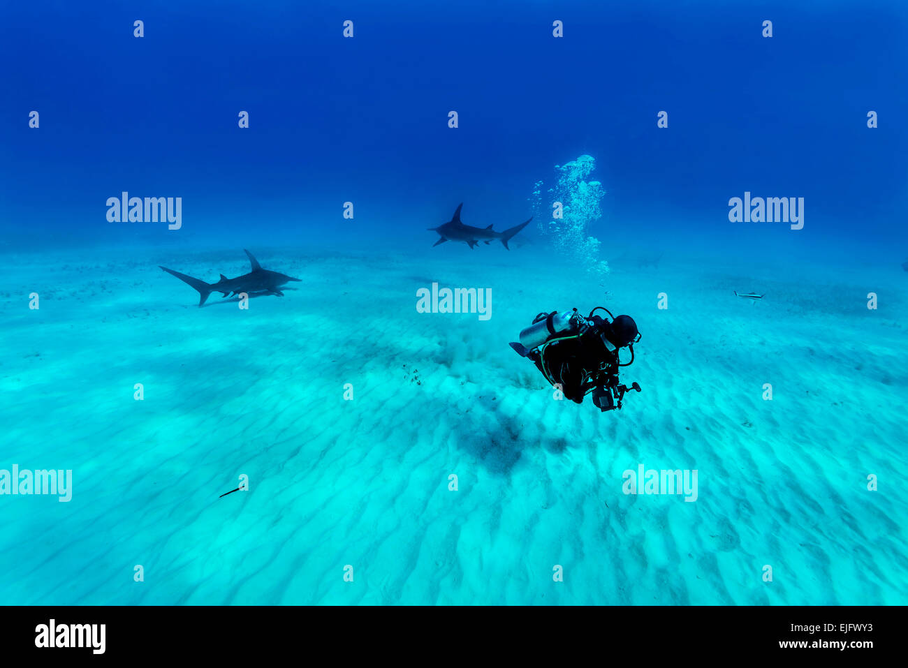 74293b79a1 Dive Bimini Stock Photos   Dive Bimini Stock Images - Alamy