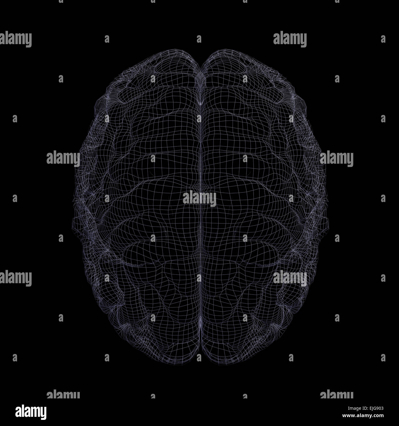 Wire-frame of human brain - Stock Image