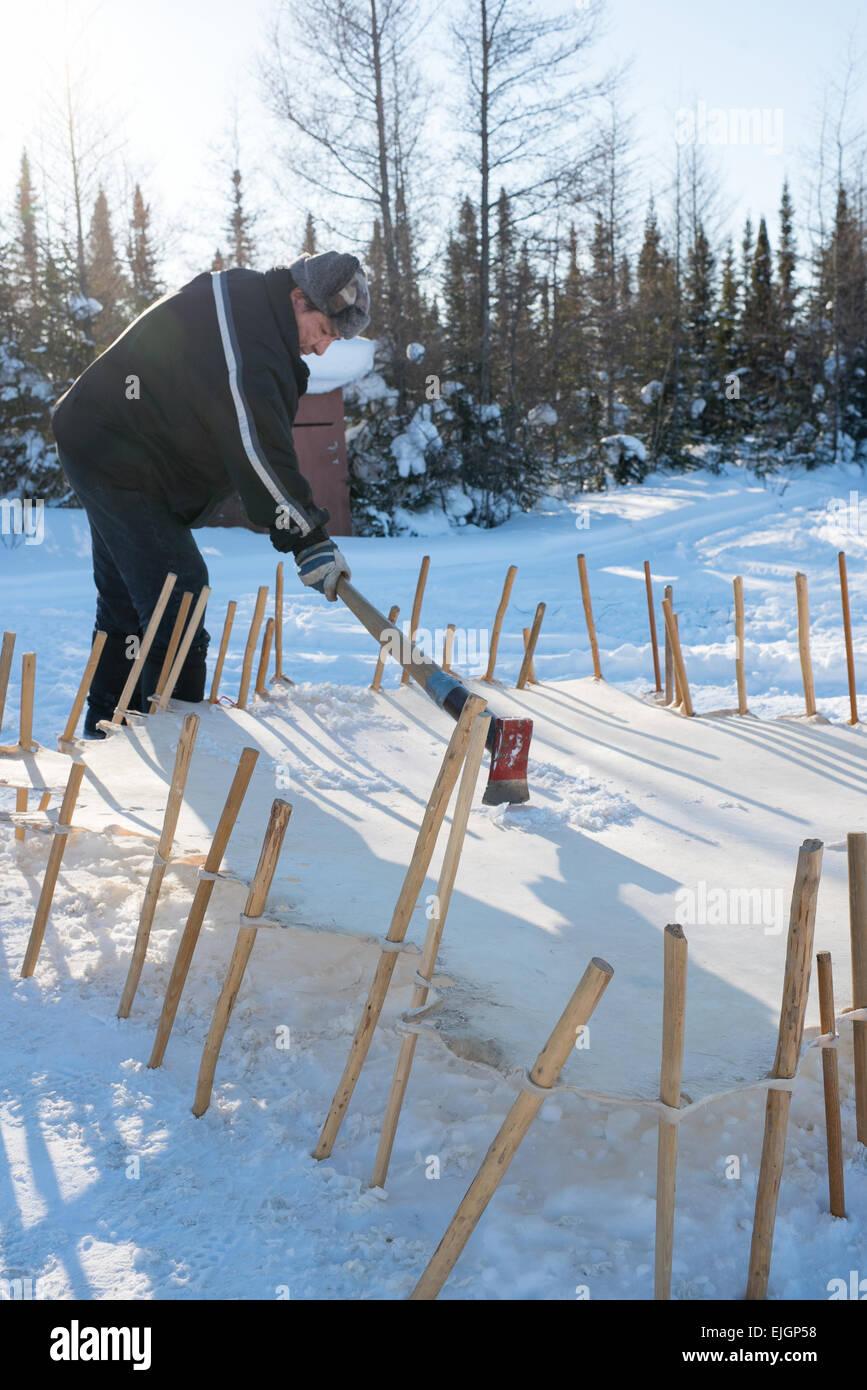 Cree man Scraping moose hide Northern James Bay Quebec - Stock Image