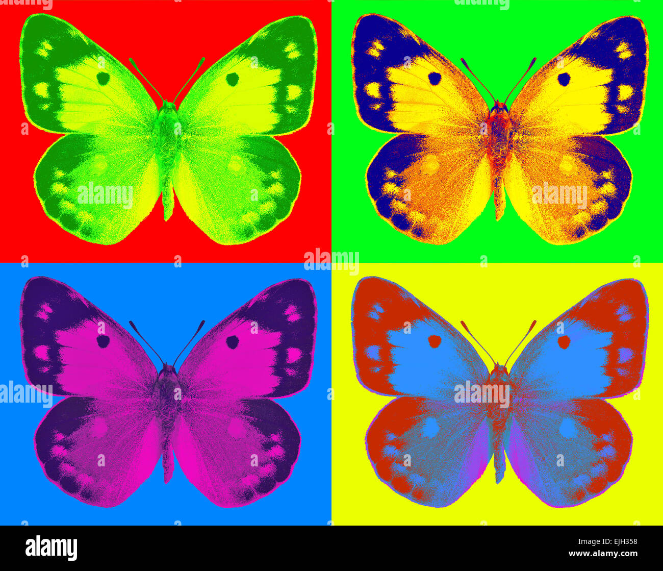 Dark Clouded Yellow (Colias croceus) in pop-art style - Stock Image