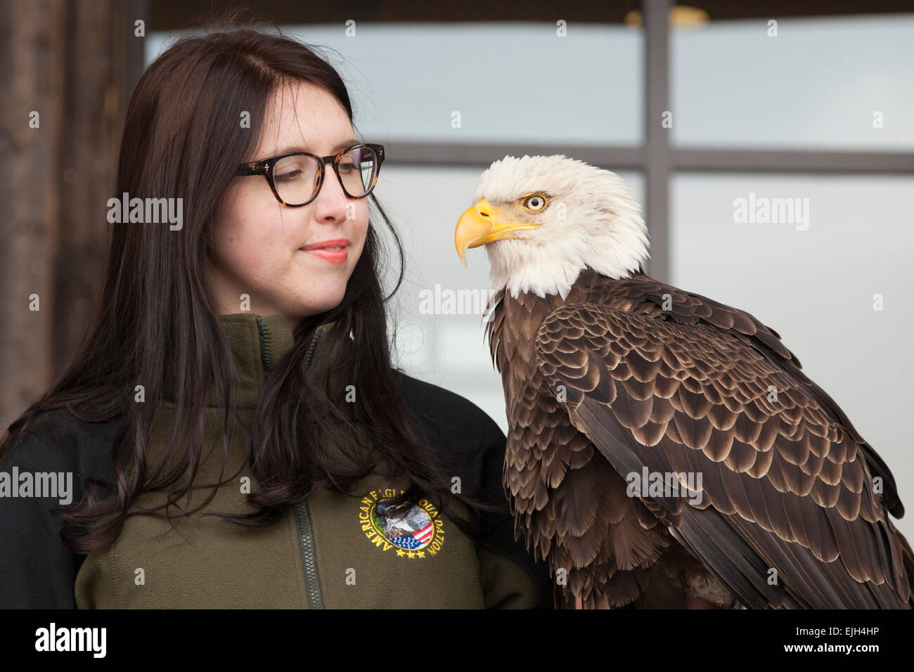 Troy, Michigan - A 25-year-old bald eagle named Challenger with his handler from the American Eagle Foundation. - Stock Image