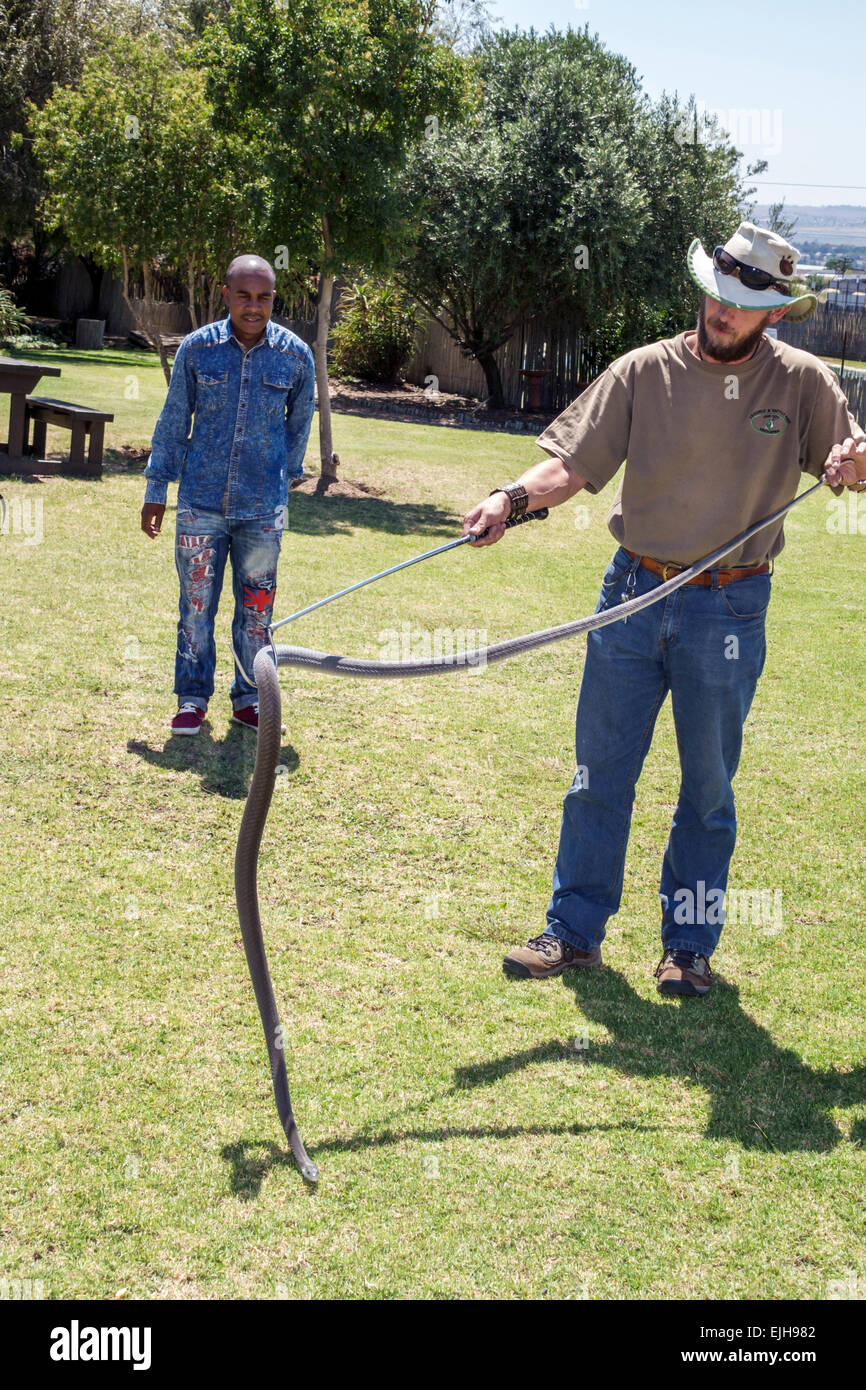 Johannesburg South Africa African Croc City Crocodile & and Reptile Park farm Black man watching employee animal - Stock Image