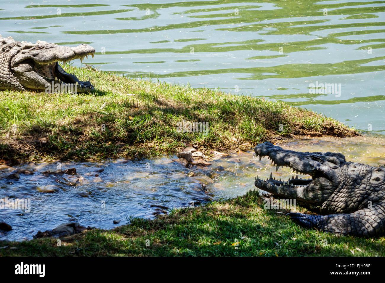 Johannesburg South Africa African Croc City Crocodile & and Reptile Park farm sunning - Stock Image