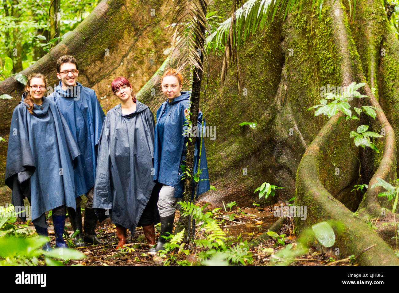 Group Of Four Tourists In Amazon Jungle Against Huge Ceiba Tree Rain Ponchos And Rubber Boots Are A Must In This - Stock Image