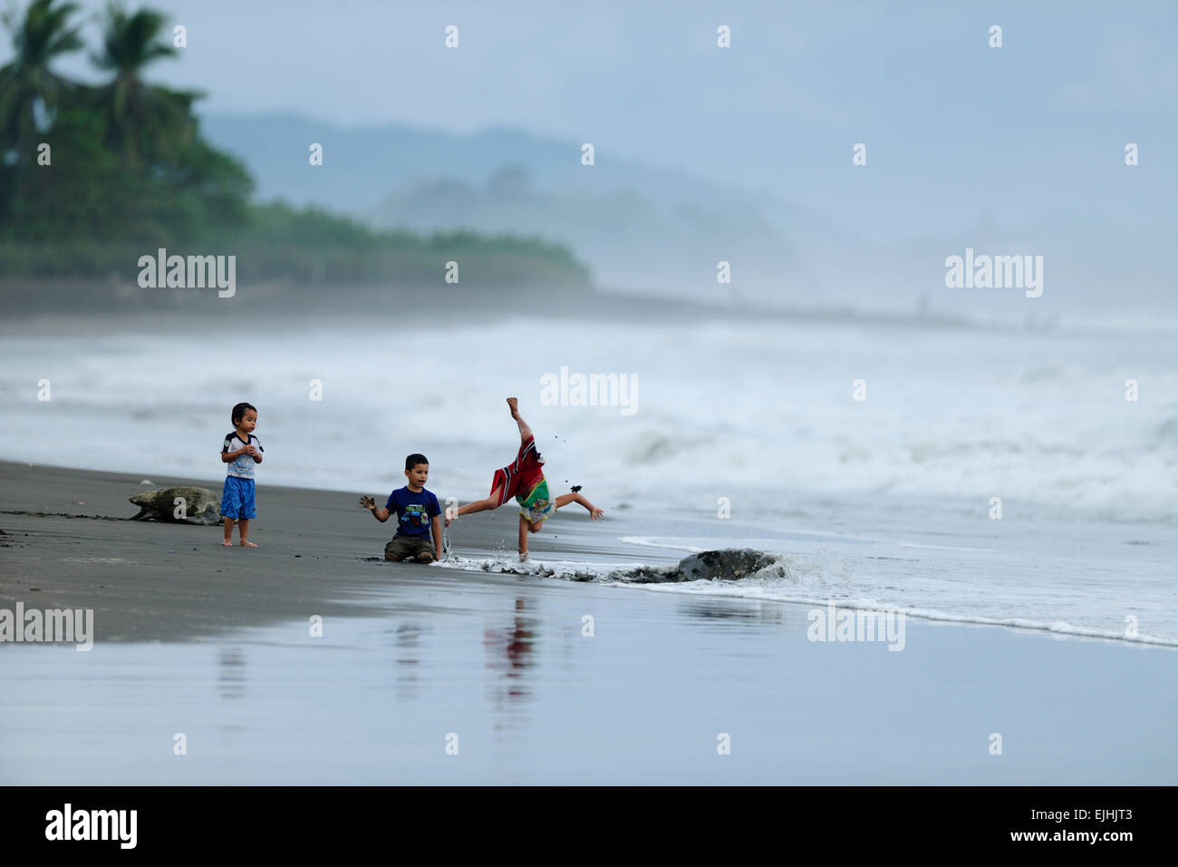 The community of Ostional, Costa Rica, runs a project of sustainable use of the olive ridley sea turtles (Lepidochelys - Stock Image