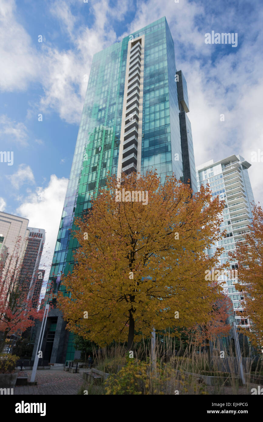 skyscraper with glass front dockside trees and autumn foliage Hochhaus Glasfassade in der Hafengegend von Vancouver/BC, - Stock Image