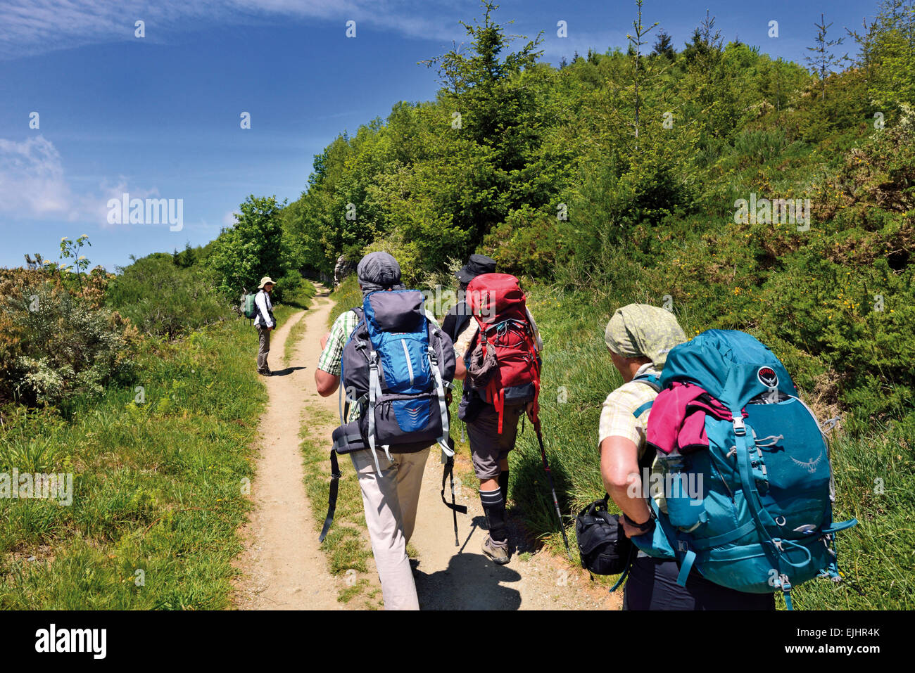 Spain, Galicia: Group of pilgrims walking the last kilometers before mountain village O Cebreiro - Stock Image