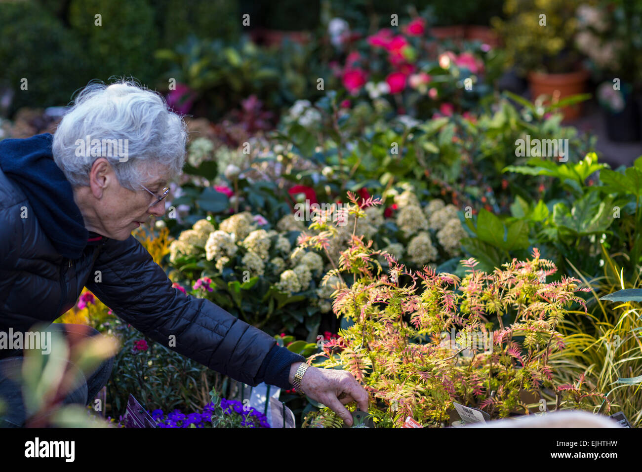 Stalls and flowers at Columbia Road Flower Market, London, England - Stock Image