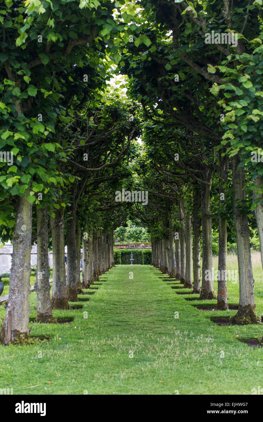 Lawn bordered by two rows of trees with fountain, Mottisfont, Hampshire, England - Stock Image