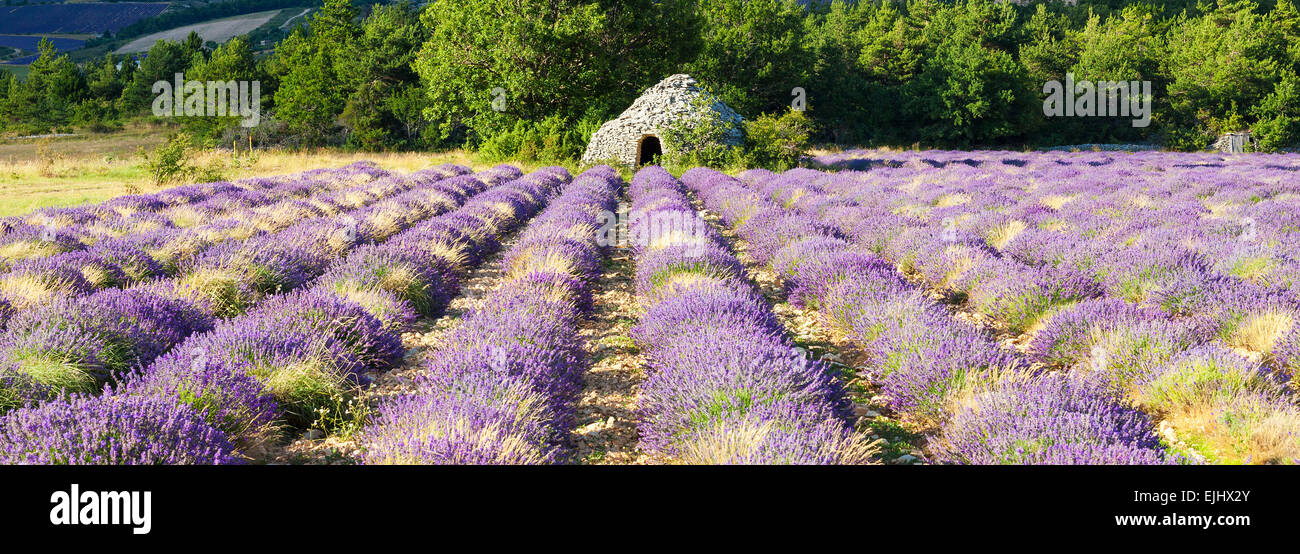 Panoramic view of Lavender field near Banon, France Stock Photo