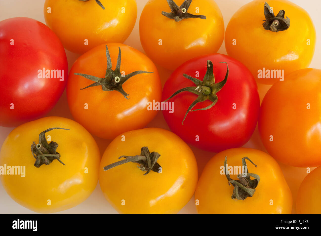 Absorbed tomatoes - Stock Image