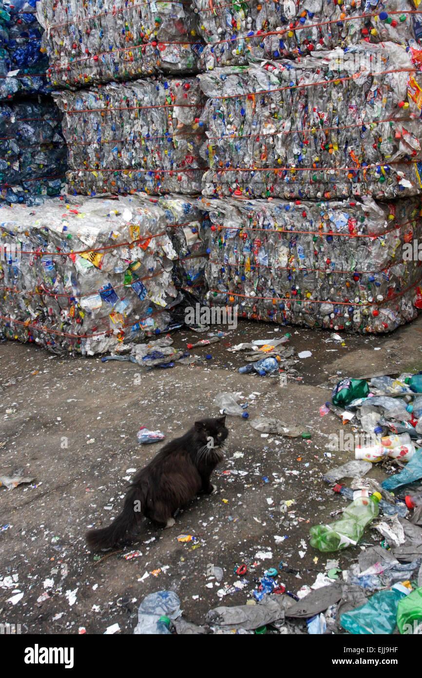 Flattened plastic bottles - Stock Image