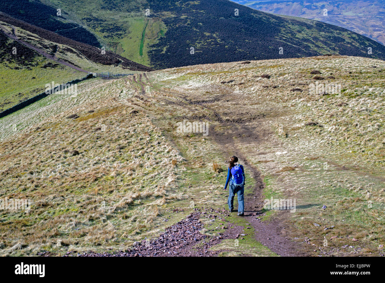 A young female walker on the Pentland Hills near Edinburgh - descending Carnethy Hill and heading on towards Scald - Stock Image