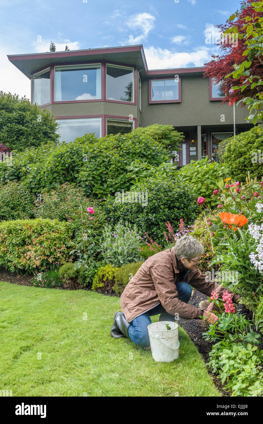 Woman weeds the garden. - Stock Image