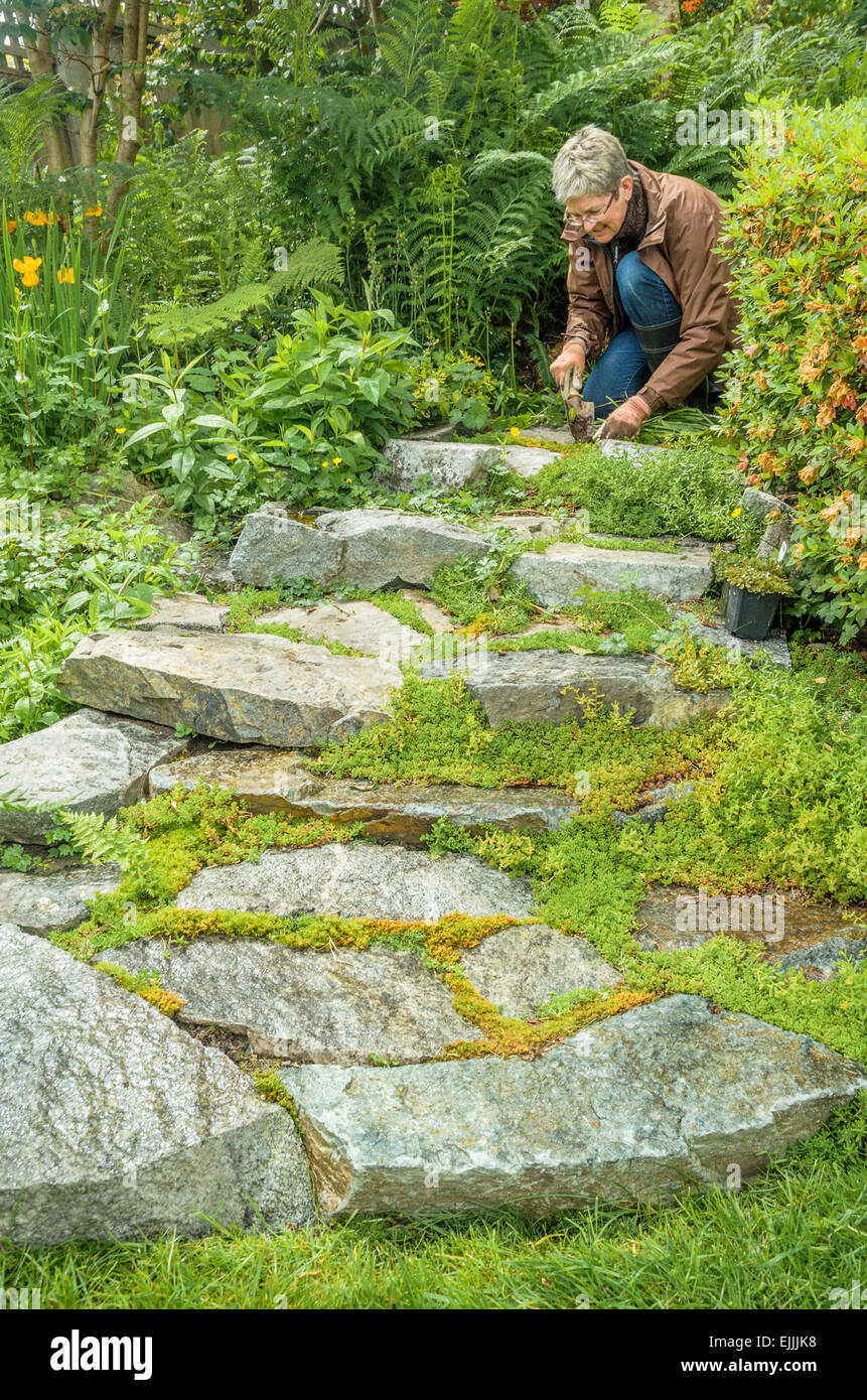 Woman weeds the garden path. - Stock Image
