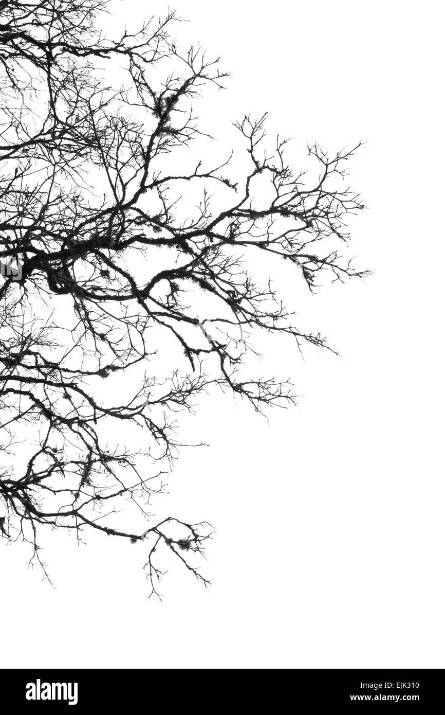 Black and white tree margin with twigs and white sky. - Stock Image