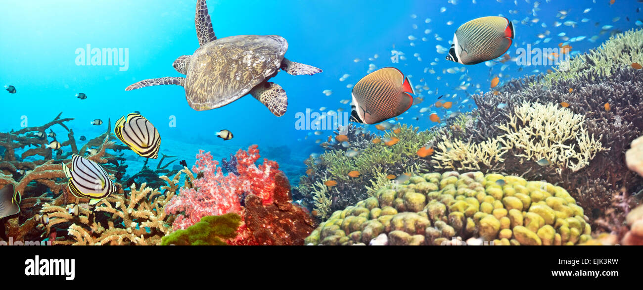 Underwater panorama with turtle, coral reef and fishes - Stock Image