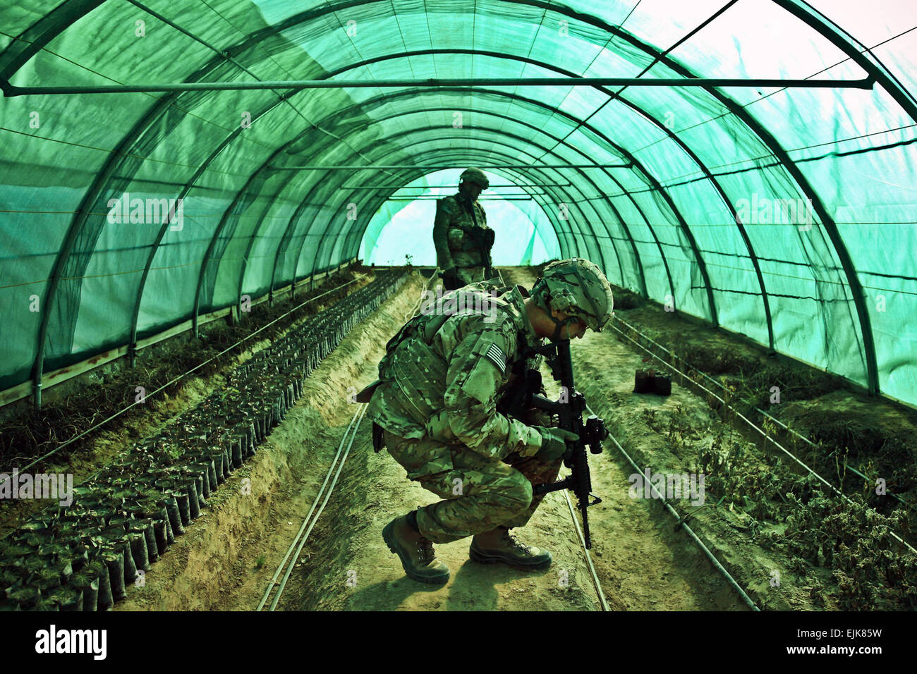 Soldiers, serving with the Kentucky National Guard Agribusiness Development Team 3, Task Force Hurricane, inspect - Stock Image