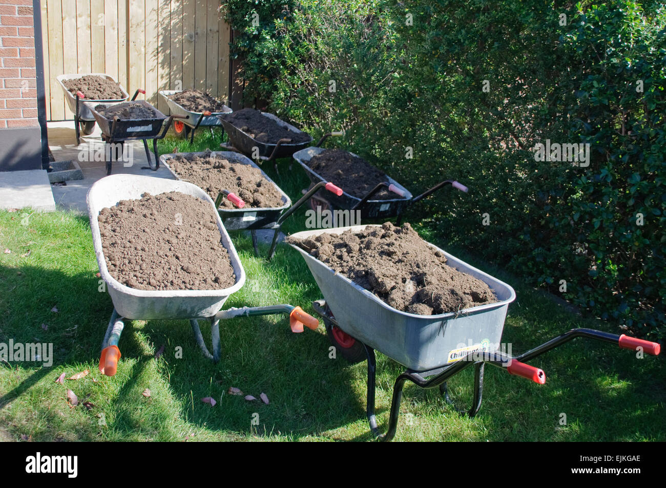 Eight wheelbarrows full of soil at a garden - Stock Image