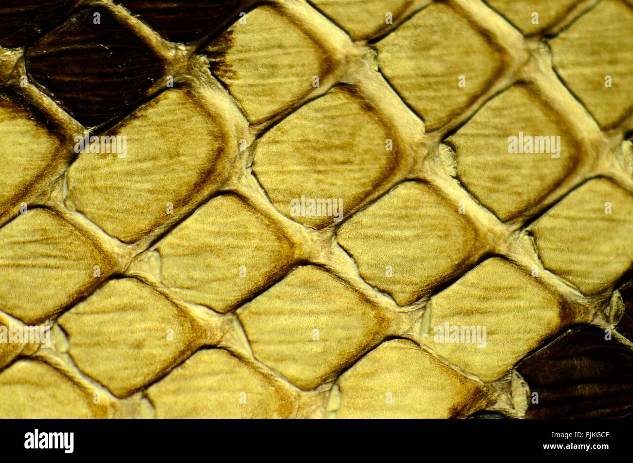 snake skin with the pattern lozenge style - Stock Image