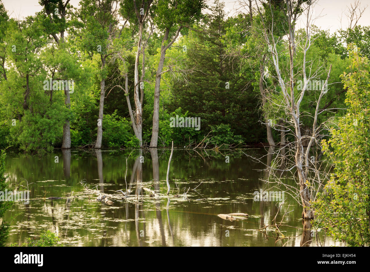 A small pond surrounded by thick green foliage in rural Oklahoma City, - Stock Image