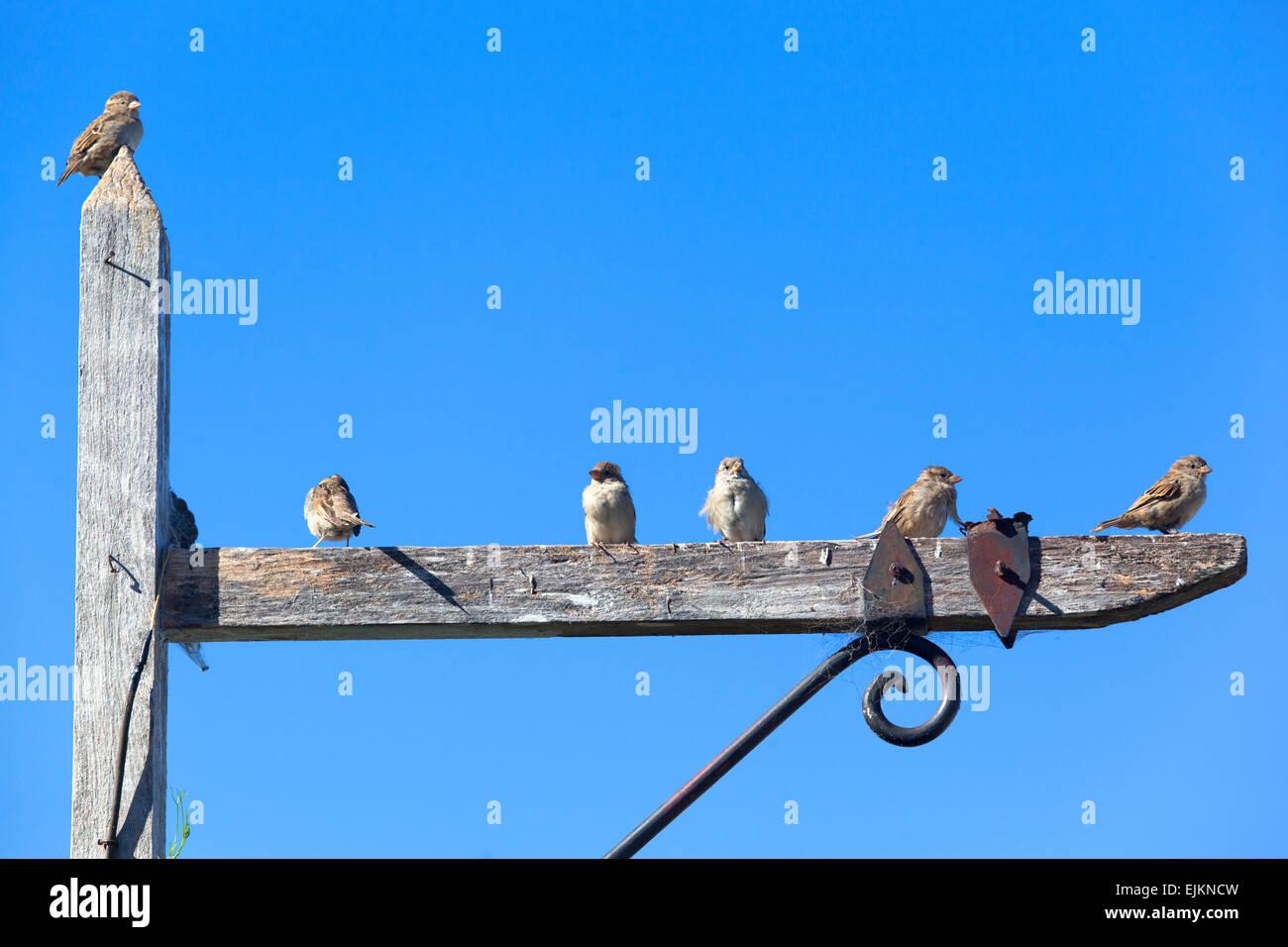 Row of birds on a wooden pole. Historical neighborhood of Colonia del Sacramento, Uruguay. - Stock Image
