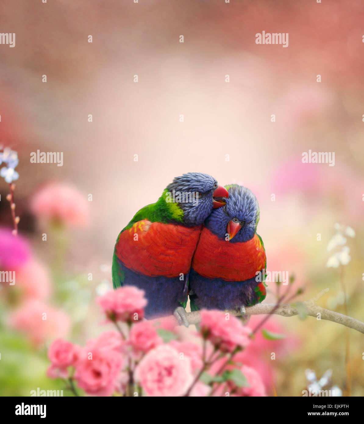 Rainbow Lorikeets Perched In The Garden - Stock Image