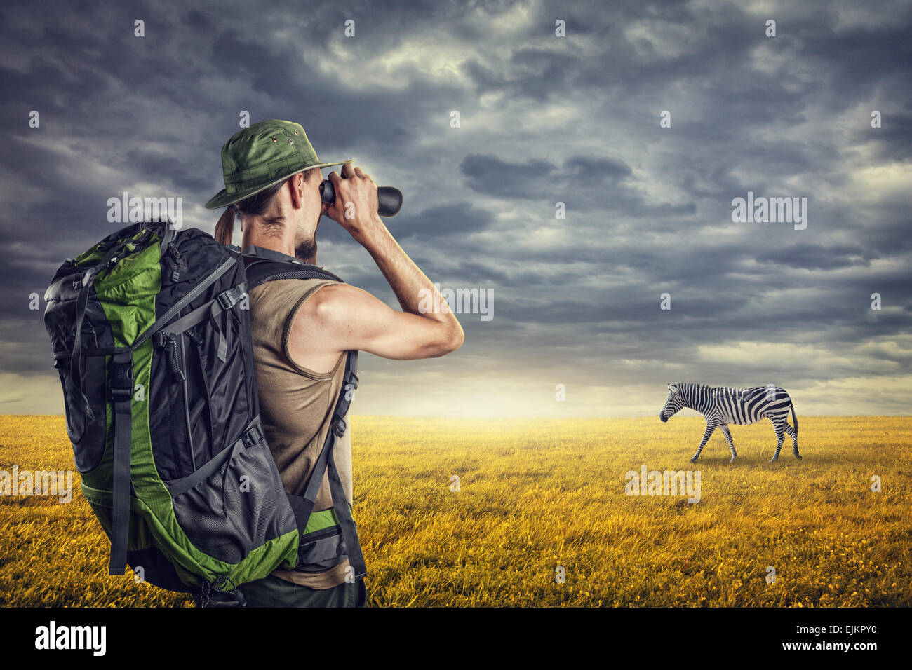 Man with binocular watching zebra in savanna at sunset sky with dramatic clouds - Stock Image