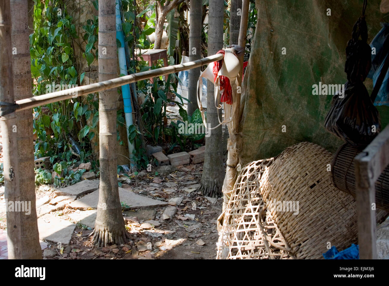 A woman's bra (brassiere) is hanging on a bamboo pole at the University of Agriculture in Kampong Cham, Cambodia. - Stock Image