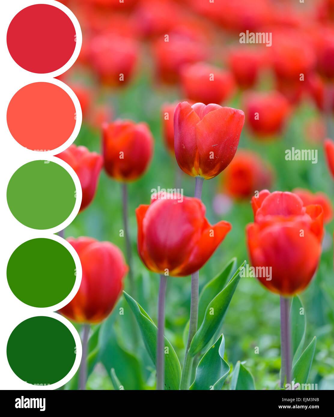 Color Palette Of Retro Spring Tulip Garden Stock Photo: 80347271 - Alamy
