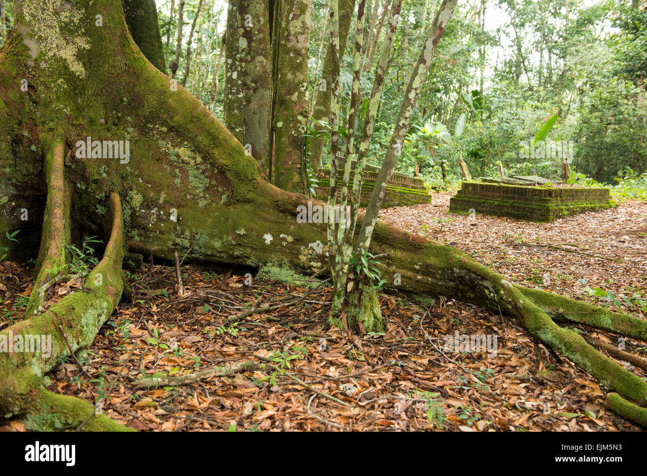 Graveyard at Jodensavanne, Suriname - Stock Image