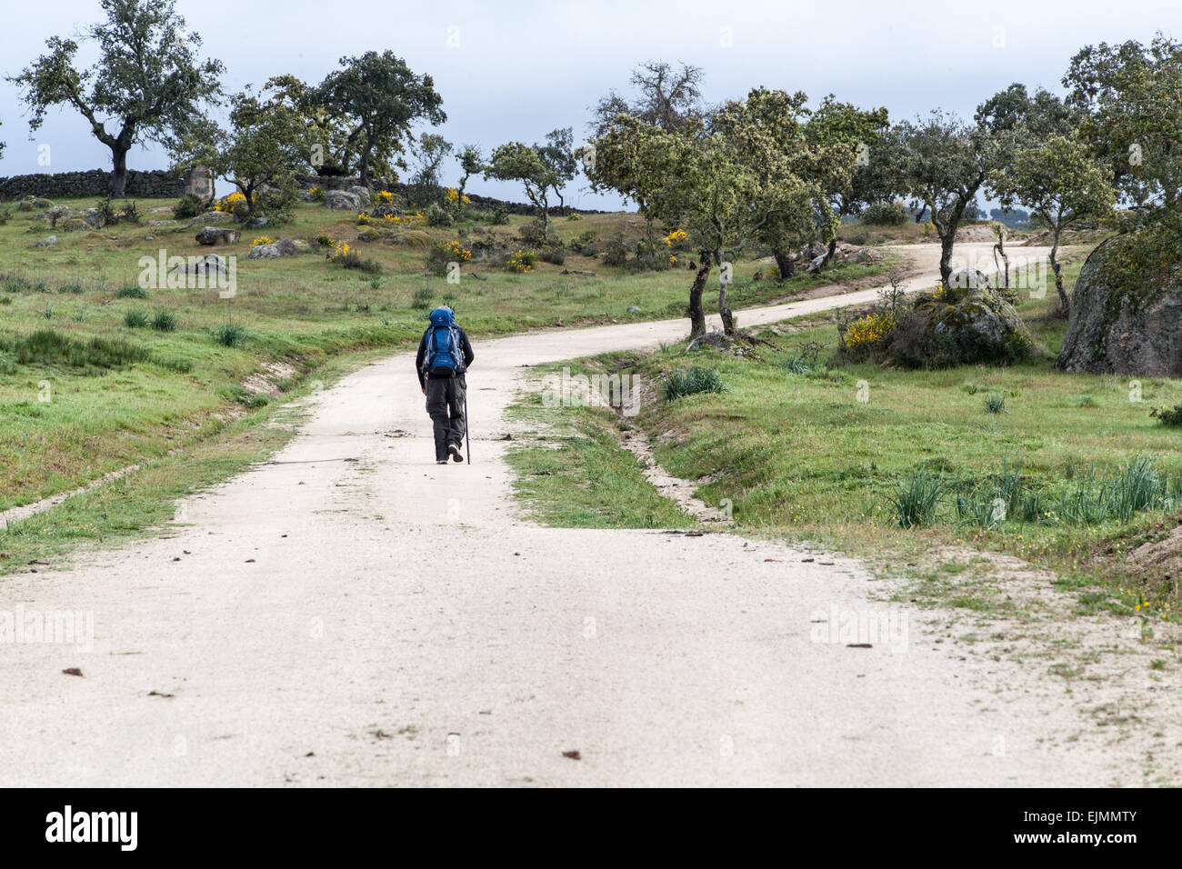 Pilgrim walking the Camino to Santiago de Compostela, traveling across rural Spain along the back roads and dirt - Stock Image