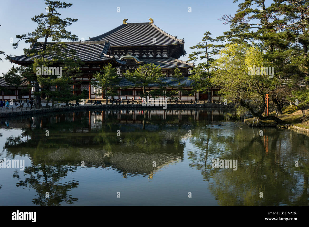 Panoramic view across a lake of Todaiji Temple in Nara, Japan on a spring afternoon - Stock Image