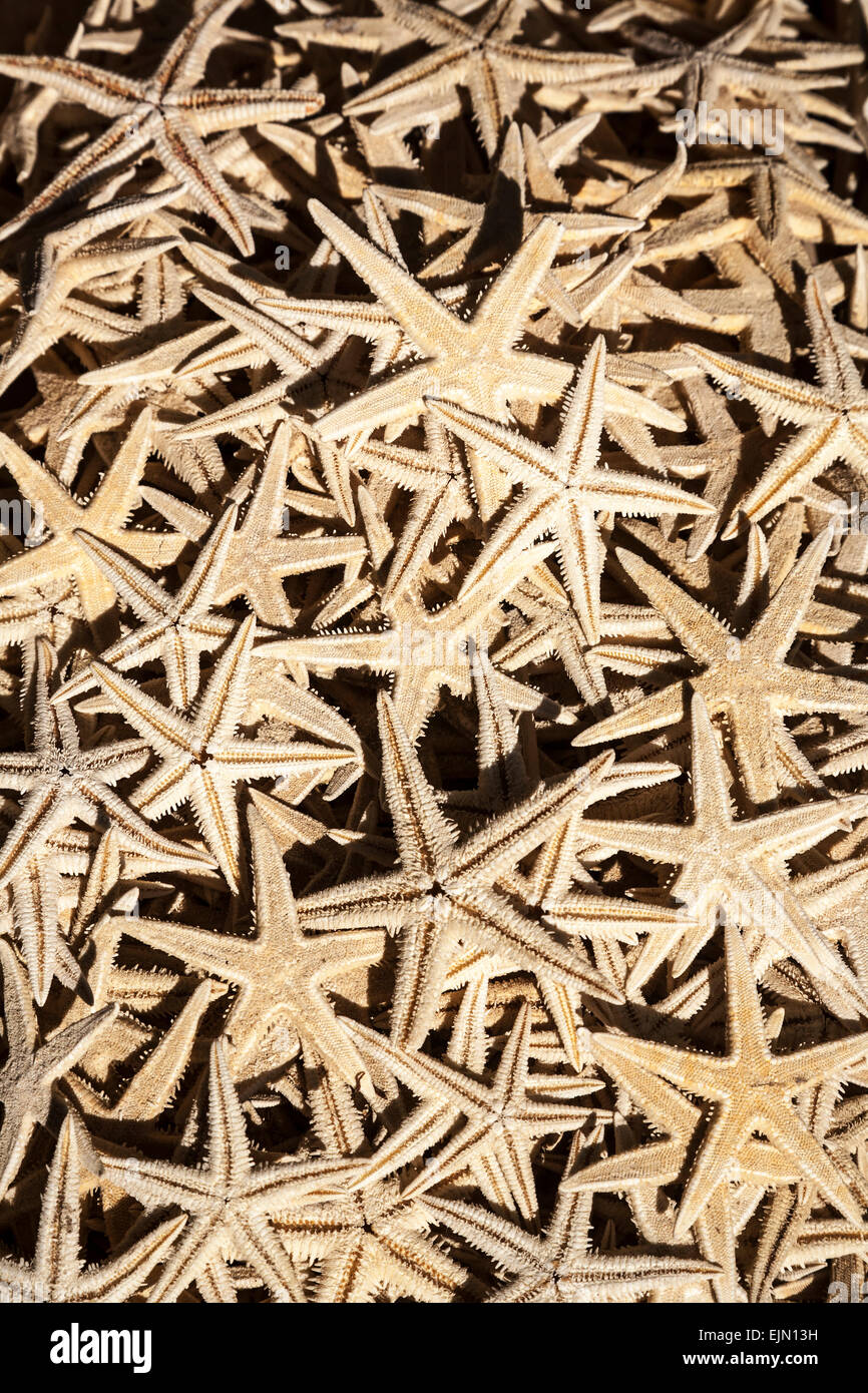 Dried starfish for sale in a souvenir shop, Fira, Santorini (Thera), Greece. - Stock Image