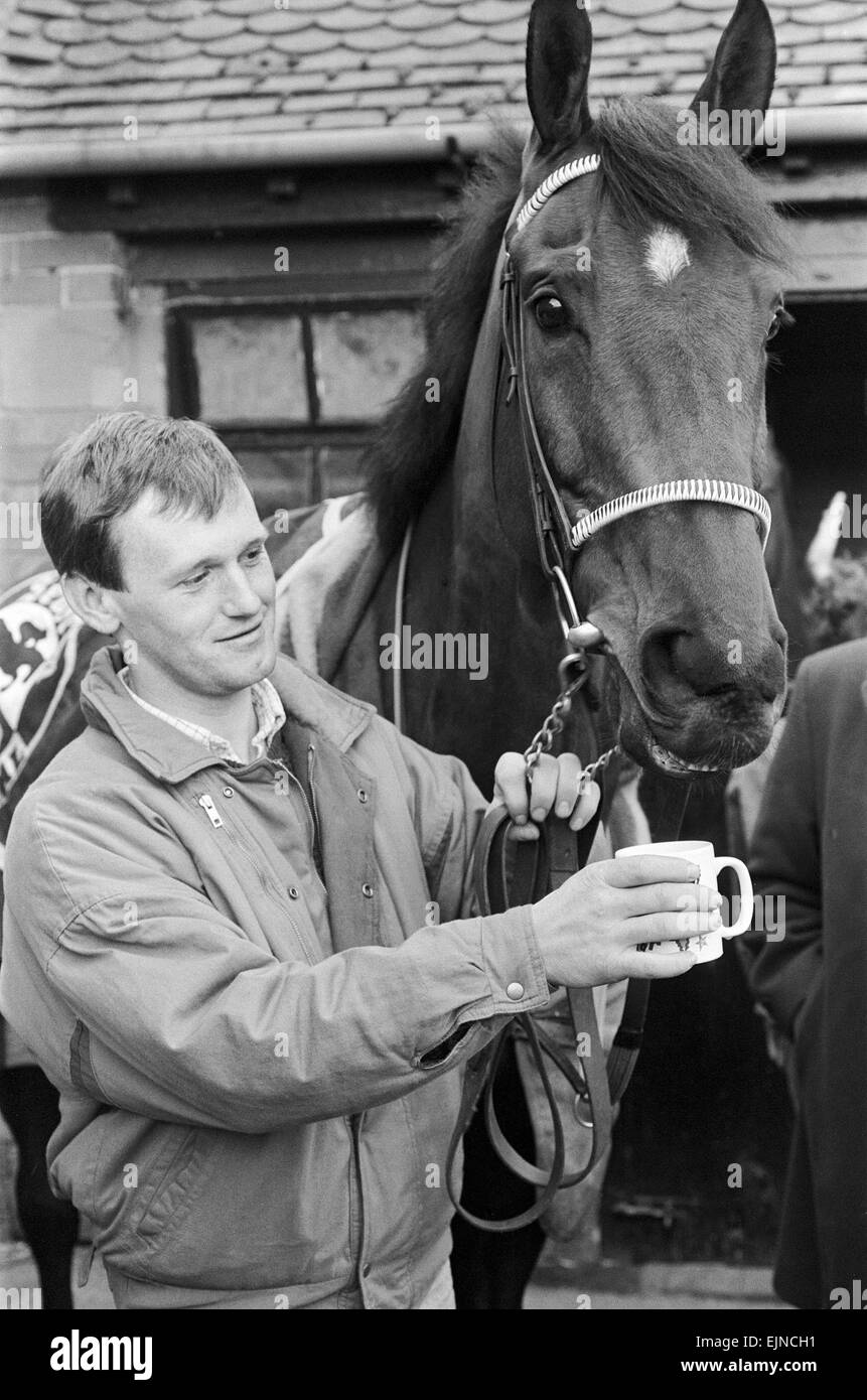 West Tip seen here having a cup of tea on his return to his stables after winning the 1986 Grands National. The - Stock Image