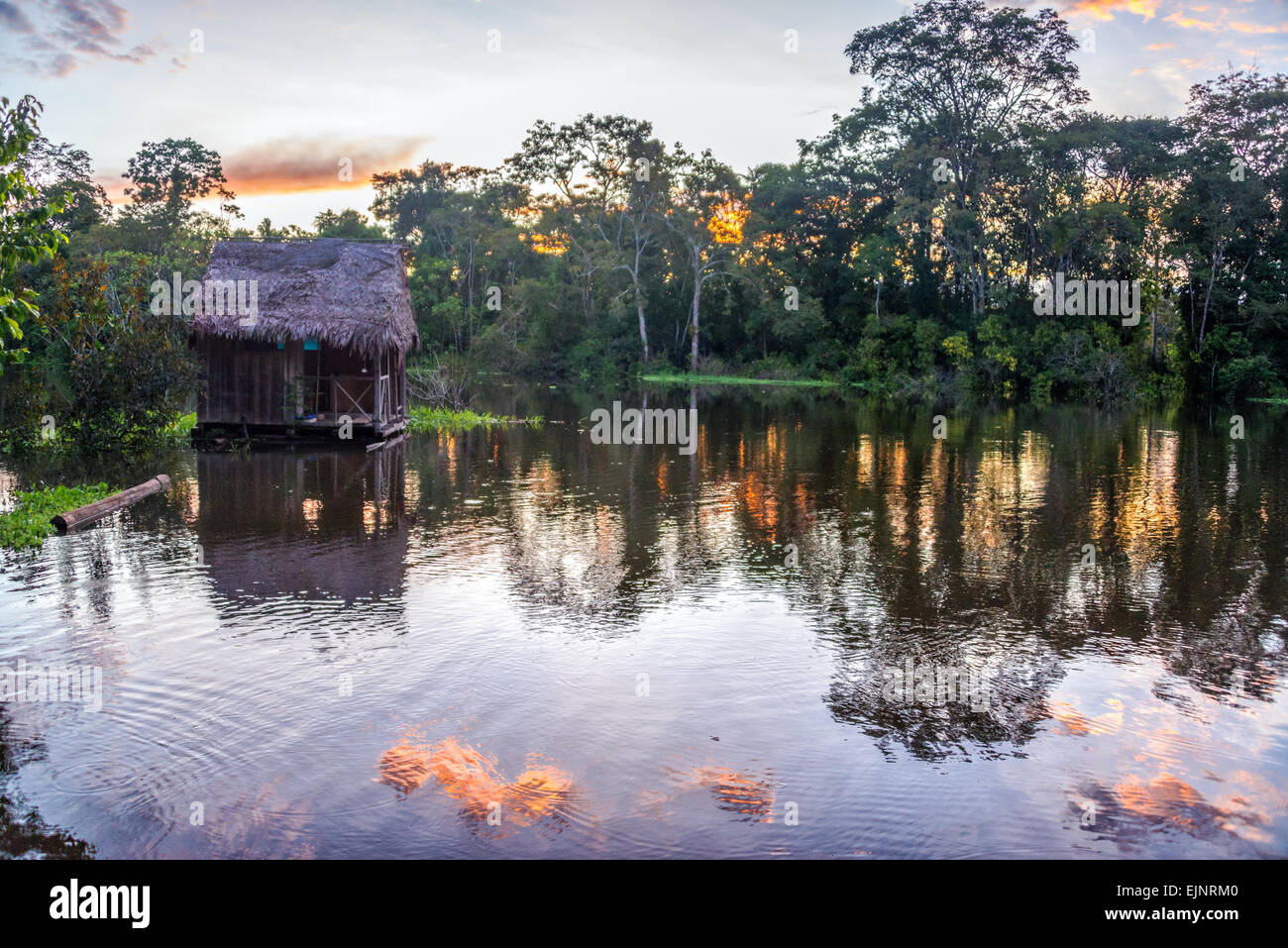 View of the Amazon Rainforest at sunset near Iquitos, Peru - Stock Image