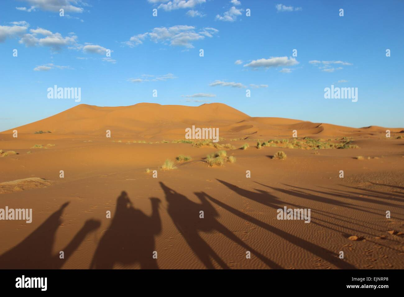 Camels shadows on the sahara desert - Stock Image