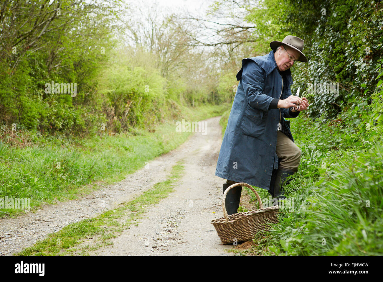 A man in a long coat and boots foraging for edible and tasty plants in the hedgerow. - Stock Image