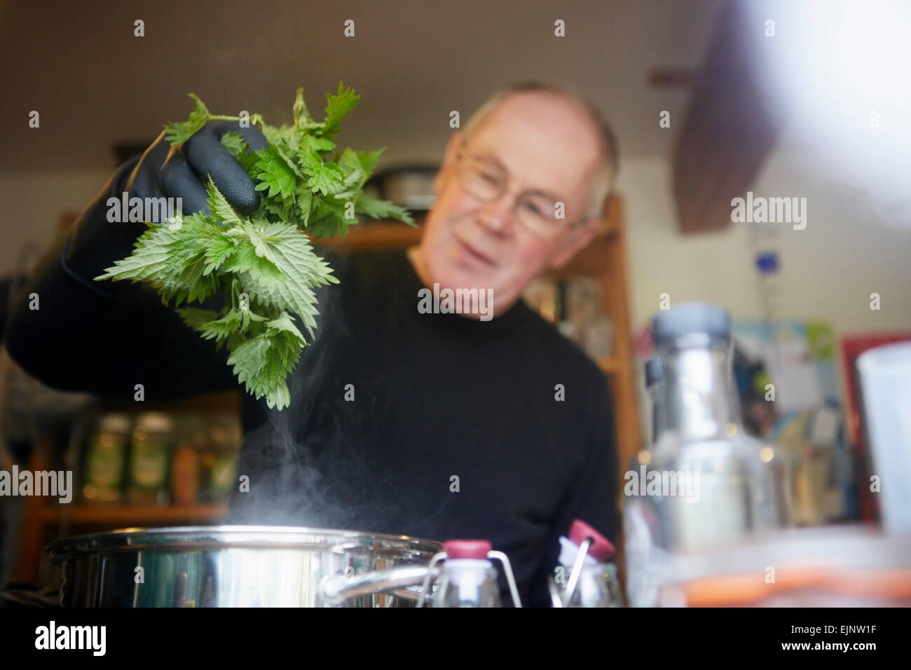 A man holding fresh foraged nettles with a gloved hand, blanching them in a pot. - Stock Image