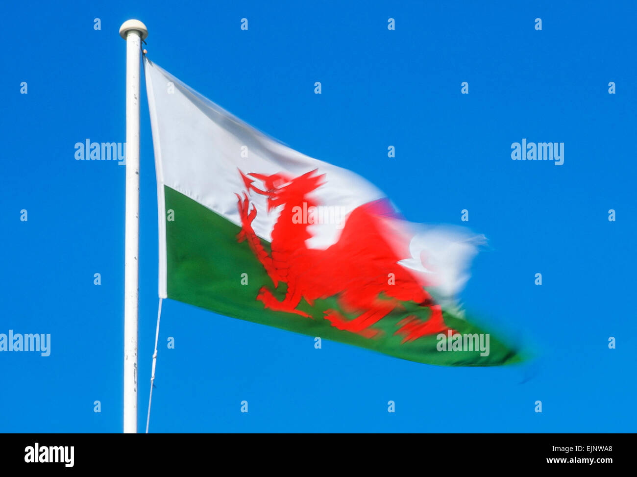 Welsh Flag blowing in the wind on blue sky background, Cardiff, Wales, UK, GB EU, Europe - Stock Image
