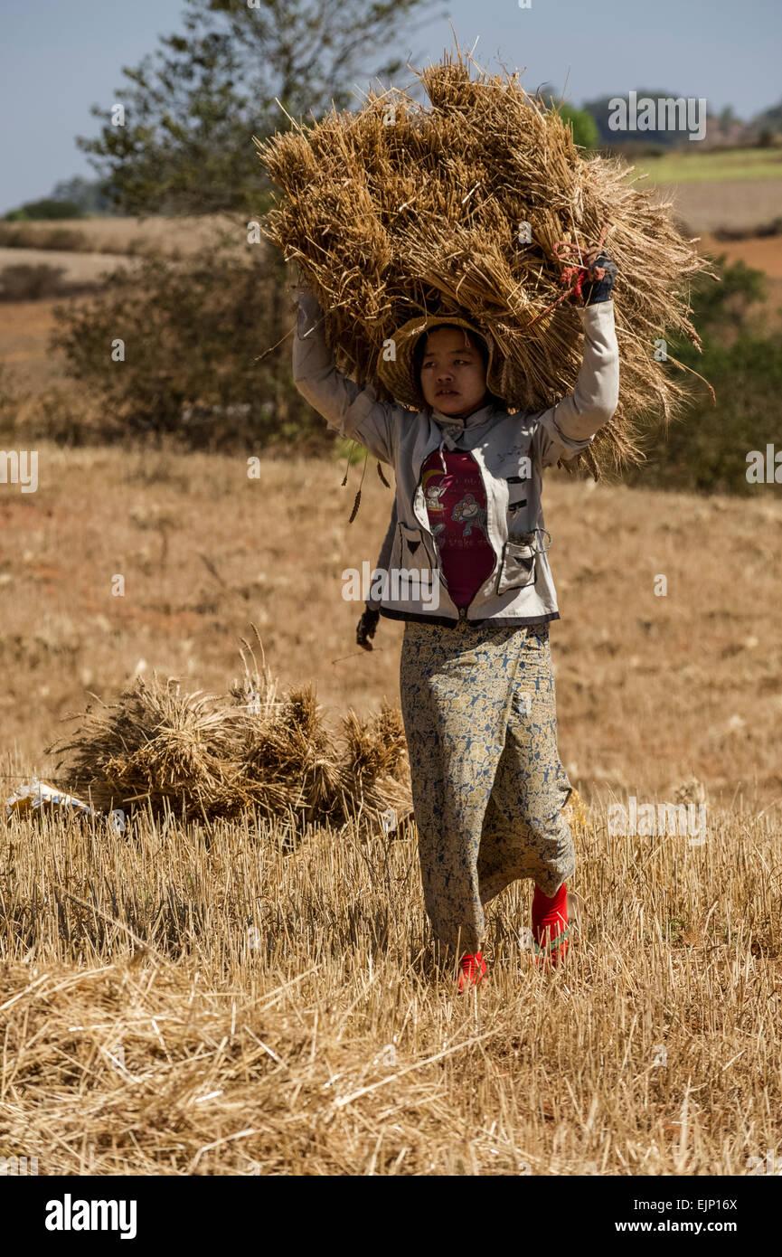 Scenes of rural Myanmar people at work - Stock Image